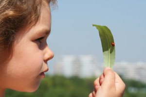 The Economics of Free Play and Nature Education: Part 2 of 3